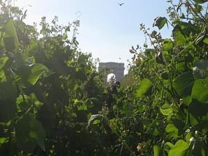 Nature Capitale ou transformation des Champs Elysées en jardin géant