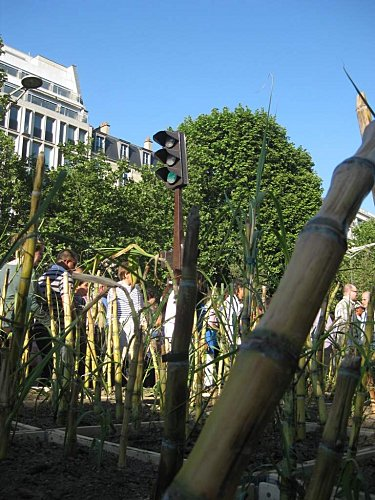 Champs-Elysees-Nature-Capital-Jardin-geant 4859