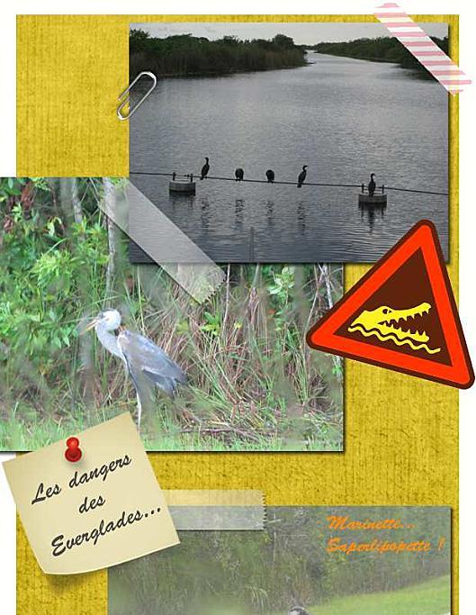 Floride Everglades2-1