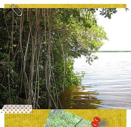 Floride Everglades3-1