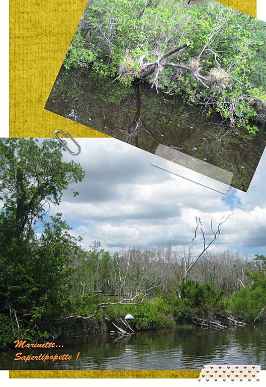 Floride Everglades3-2