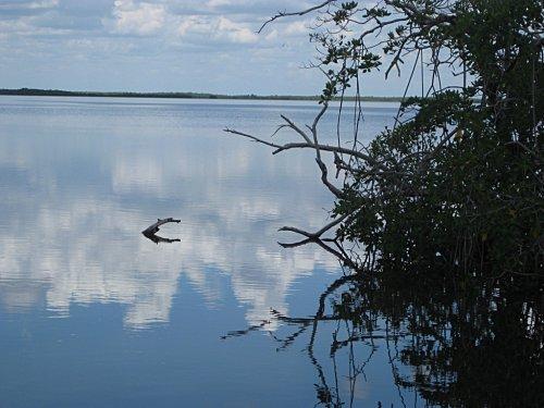 Floride everglades13