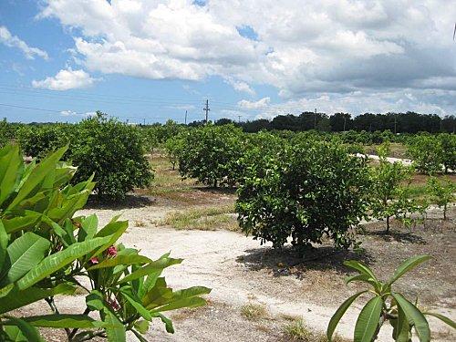 Floride mixon3