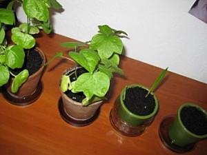 Des nouvelles de mes plantes