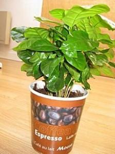 Ma nouvelle plante !!