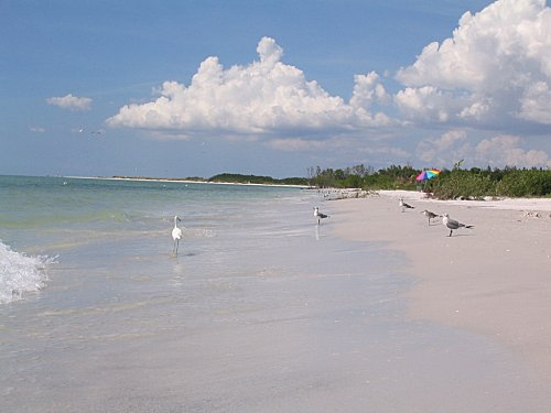 floride clearwater 9