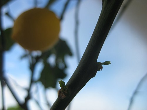 jardin2012 1