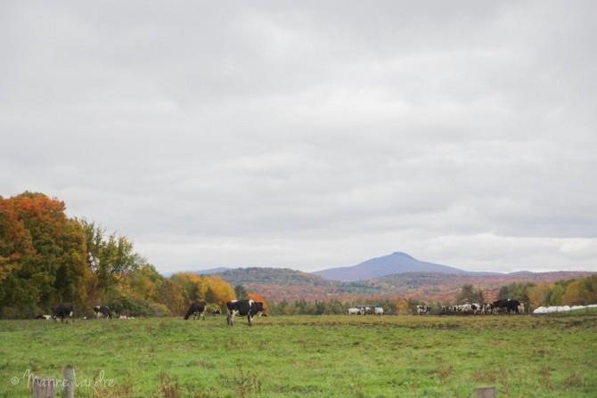 route-vins-quebec-cantons-est
