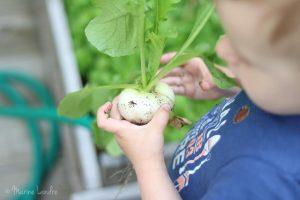 Notre jardin potager de ville, à cultiver en famille
